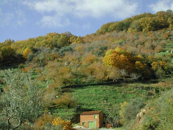 Valle del jerte el oto o for Oficina de turismo valle del jerte